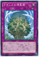 card100018859_1.jpg